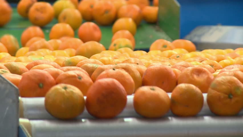Tangerines In The Factory