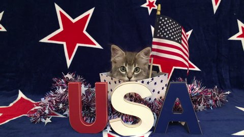 4K HD video of Patriotic tabby kitten, blue background with red stars outlined in white, kitten sitting in red and white stripped box tinsel with red white blue U.S.A. blocks in front of him her