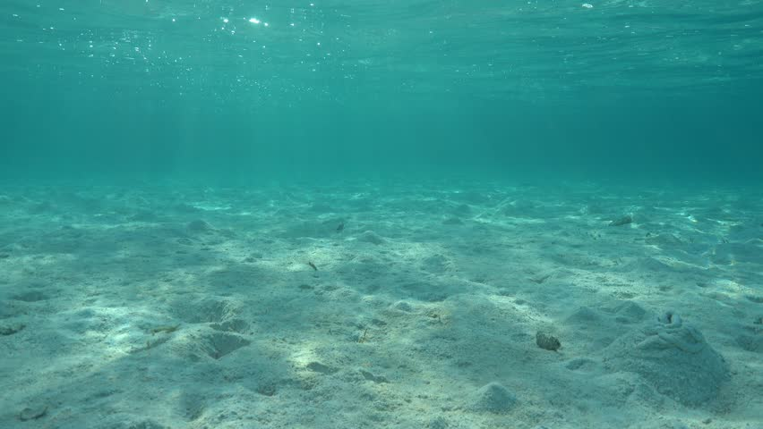 underwater scene on shallow ocean floor� royalty free video