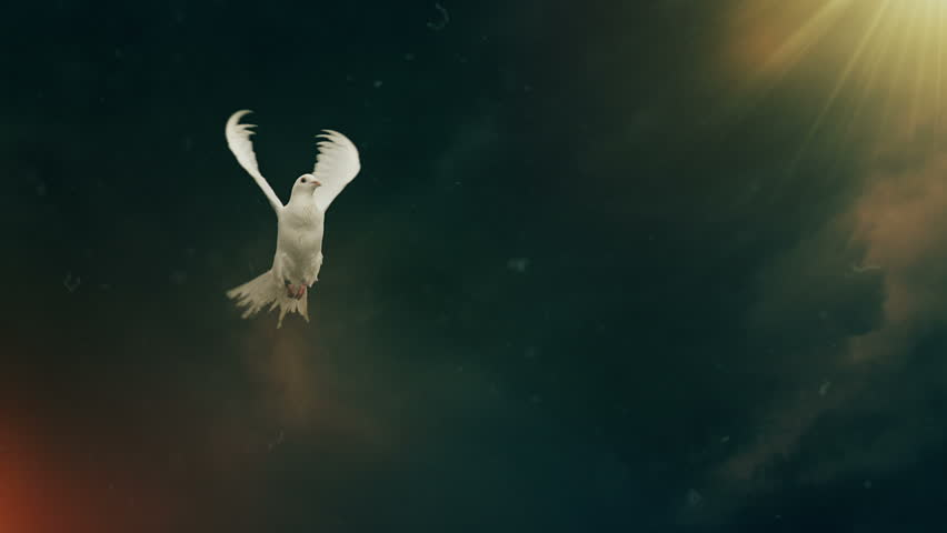 Dove of hope. Slow motion. Front view.