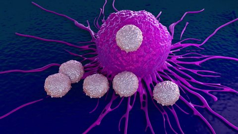 T-cells attacking cancer cell illustration of microscopic video