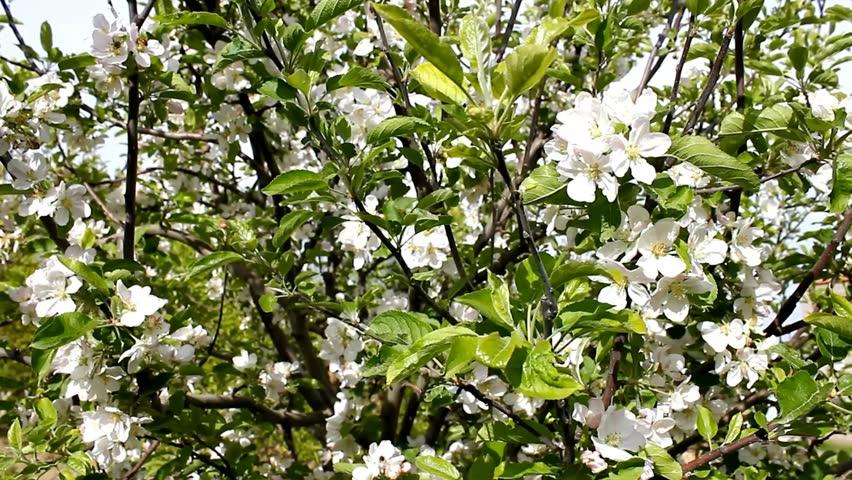 Growing Plant Under Oak Tree Stock Footage Video 100 Royalty Free