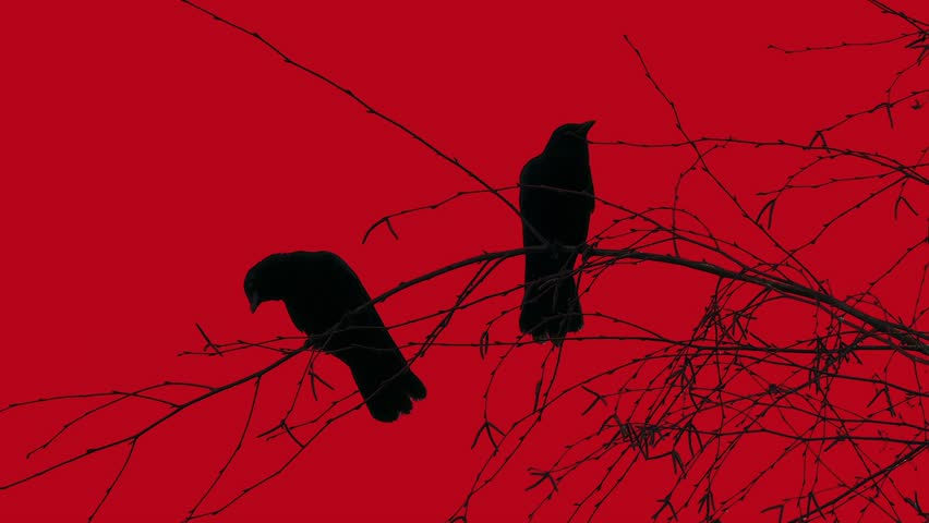 Two Black Birds, Crows, Ravens - Silhouette On Tree - Bloody red sky background for your Halloween, horror, nightmare, mystic, magic, fantasy, witchery, crime, hell, other dark and grunge projects.