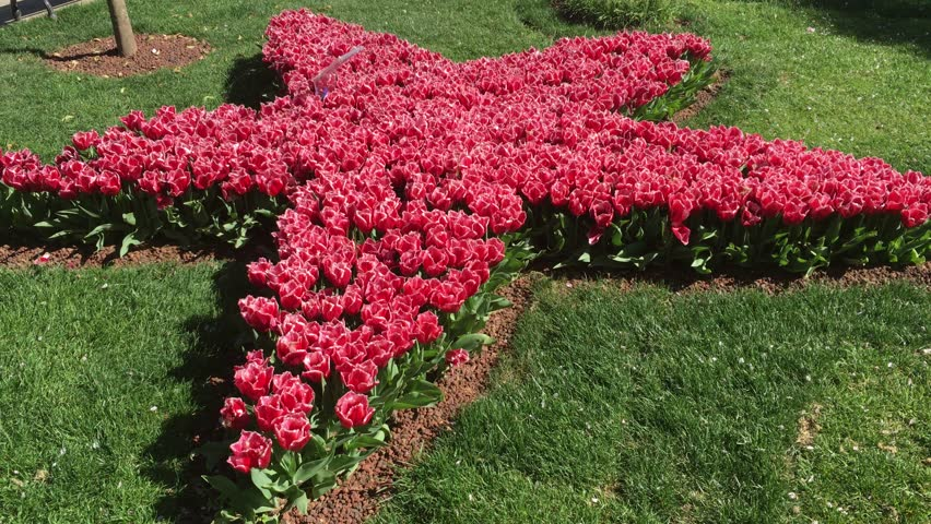 Star Shape Design Red Flowers In The Public Park 4k Stock Footage Clip