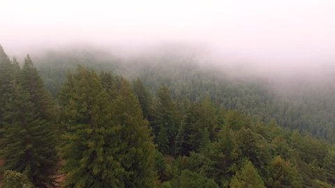 Aerial view flying over a foggy redwood forest in the hills of Northern California. Calm, quiet, misty.