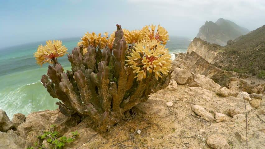 Cliffs near Al Mughsayl beach in Salalah, Oman