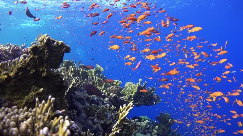 Sea seabed fish corals underwater ocean tropical g wallpaper ...