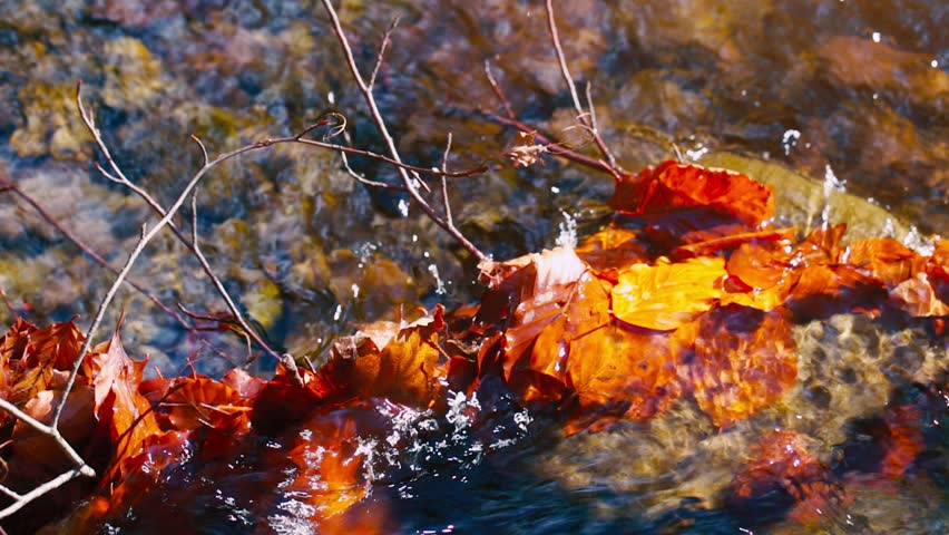 Autumn leaves on wet stones in the water. A small creek in the mountains forest strewn with colorful beech and other tree leaves. In the backlight warm autumn sun. In a shallow DOF.