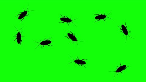 Swarm of cockroaches, CG animated silhouettes on green screen, seamless loop