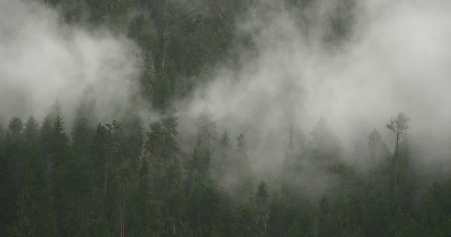 4k time lapse of mountain mist rising in the morning,fog pine trees,such as wonderland.Bomi County in tibet,the largest precipitation area in China. gh2_09918_4k