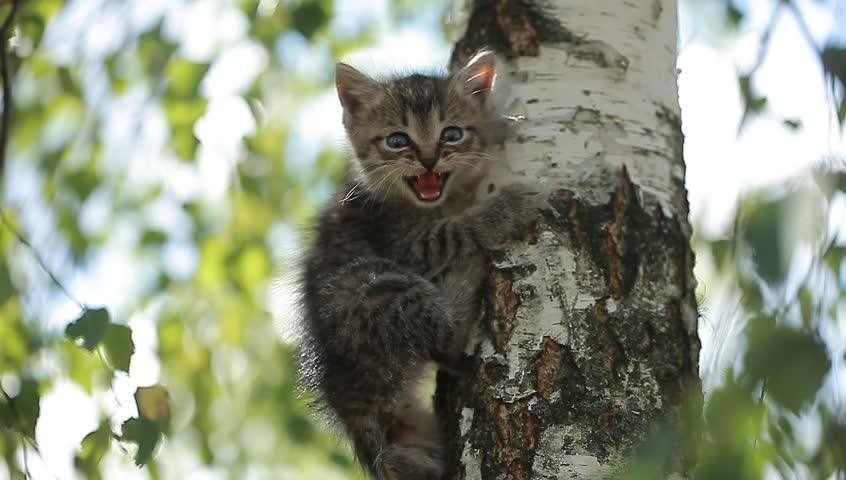 A little funny kitten meows on a tree | Shutterstock HD Video #18194398
