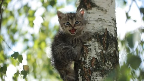 a little funny kitten meows on a tree