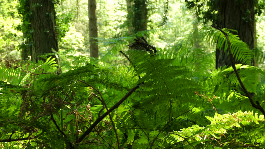 Panning through a thick forest in summer with thick bracken foliage - 4K stock video clip & 4K View Through Leaves And Trees Of Rainforest Canopy In Tropical ...