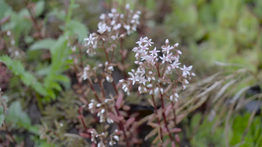 Stock video of the small white flower plant on | 17935669 | Shutterstock