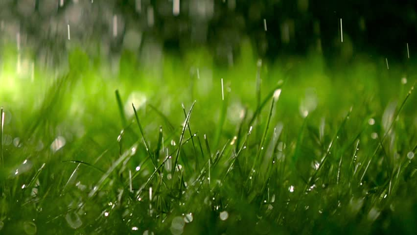 Grass With Dew Background Stock Footage Video 6180794 ...