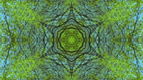 Toned kaleidoscope of maple tree