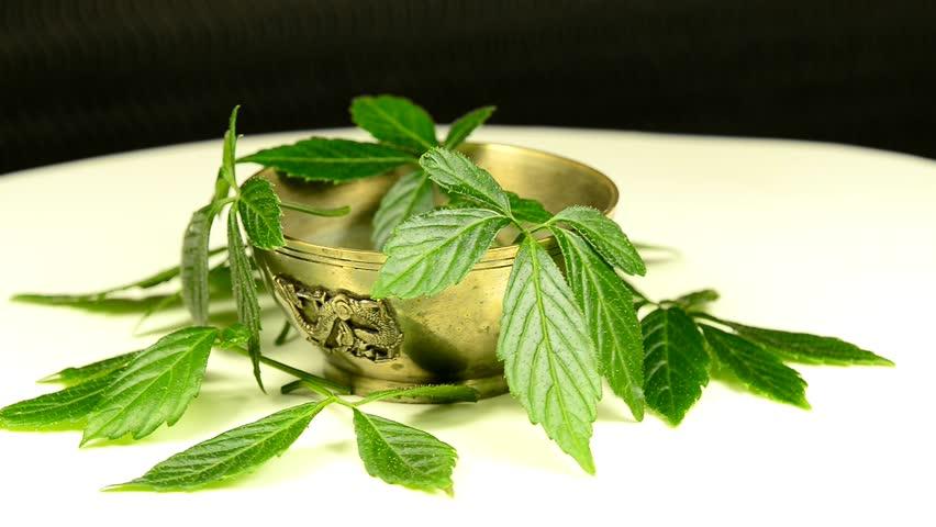 Jiaogulan, Chinese TCM medicine herb for longevity