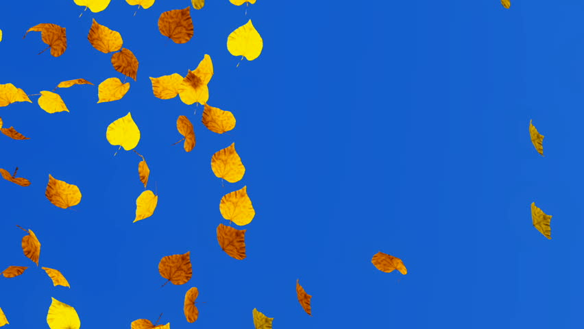 Fall season decorative 3D animation of colorful falling autumn leaves. Blank bright blue background at the final of clip. Pan shot. | Shutterstock HD Video #18777668