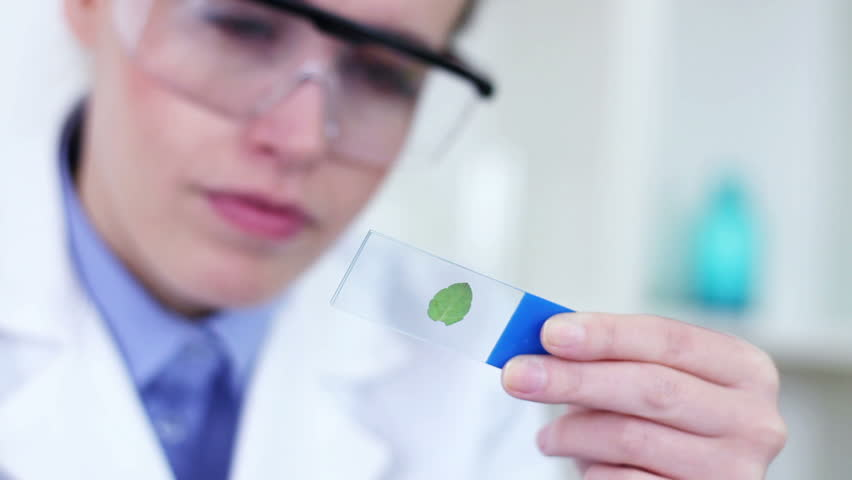 Female scientist with magnifying glass looking at glass slide with green leaf