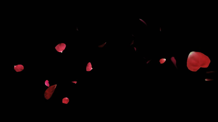Falling rose petals fly down blown by the wind