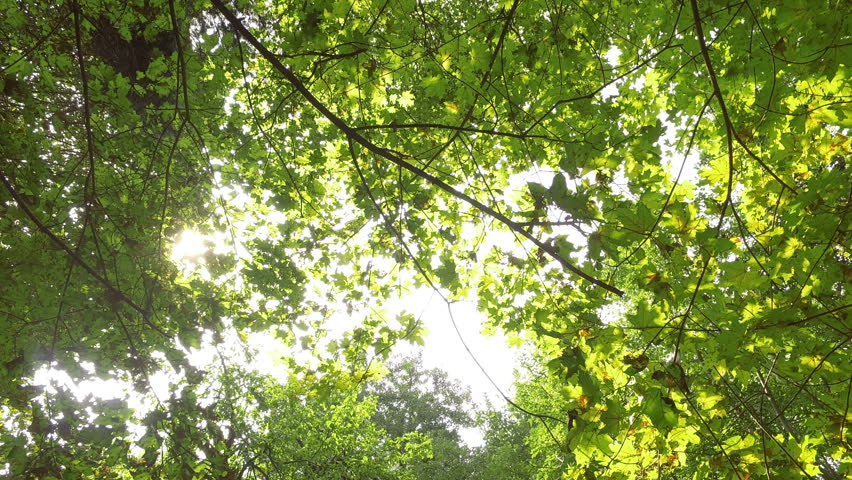 Sun rays through the trees   Shutterstock HD Video #18959198
