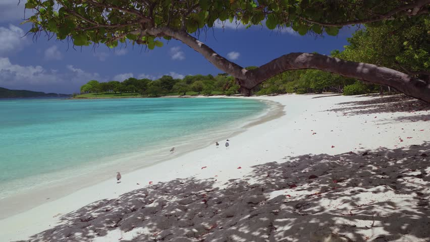 Stock Video Of Scott Beach Caneel Bay 19287088