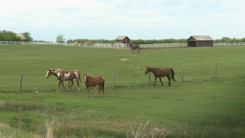 Horses In Farm Field
