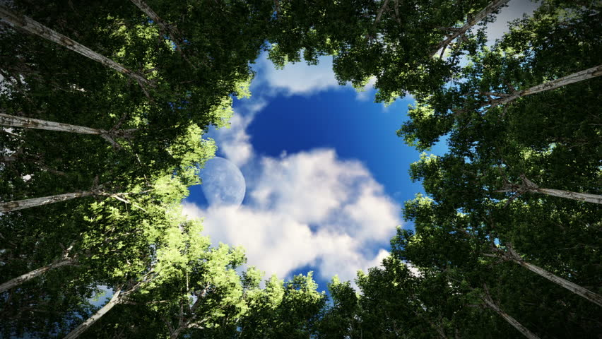 Looking up at a circle of redwood trees, timelapse clouds, full moon