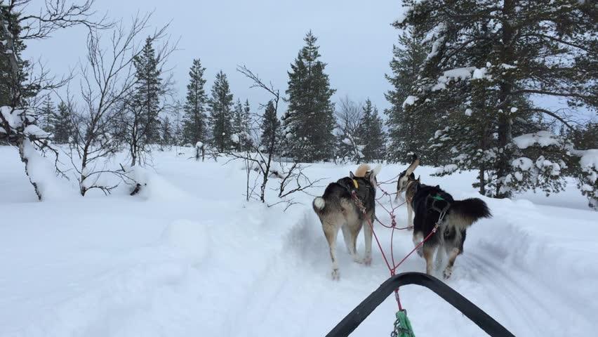 Husky Ride in Lapland 7c84226b9