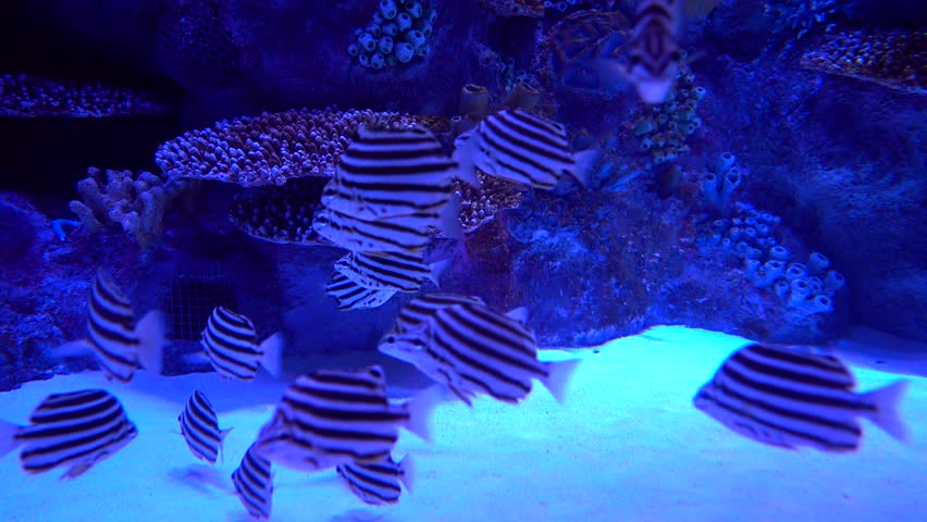 effect of lion fish on reefs Coral reef module fish coral uncommon and their ecological effects are largely the impacts of invasive lionfish to coral reef ecosystems in the.