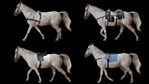 Horse is harnessed and saddled walking. Variations Saddle: sports, racing, cowboy. Animation isolated and looped.