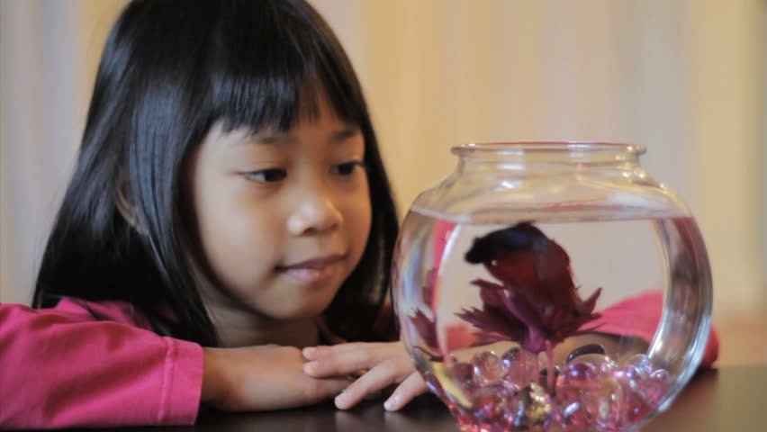 A cute little 5 year old Asian girl enjoys watching her pretty red Betta fish swim in the bowl.