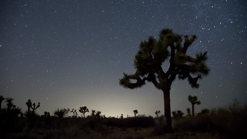 4K time lapse of a Joshua Tree and the stars rotating around Polaris, the North Star on a moonless and cloudless clear night in Joshua Tree National Park in California