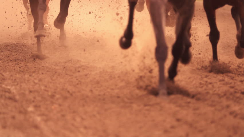 Horse racing. Legs of horses close-up. A lot of dirt under his hooves. Slow motion