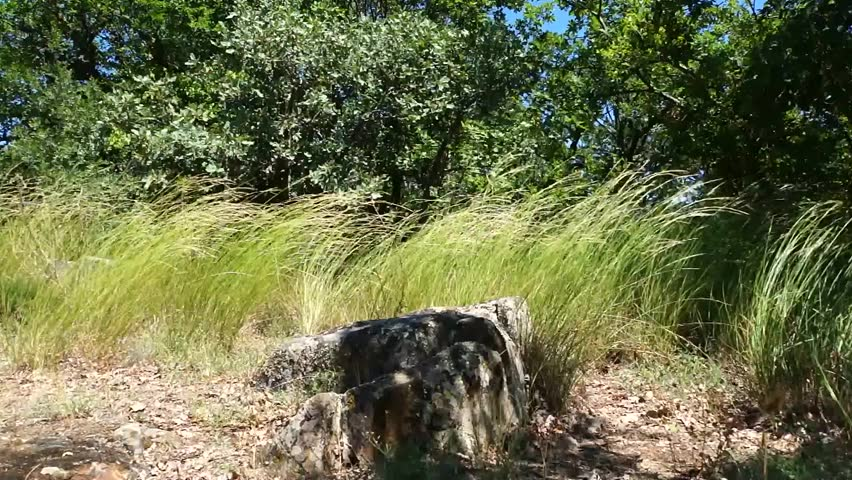 stone on Ayu-Dag in the feather grass