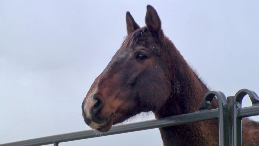Horse Behind Metal Bar