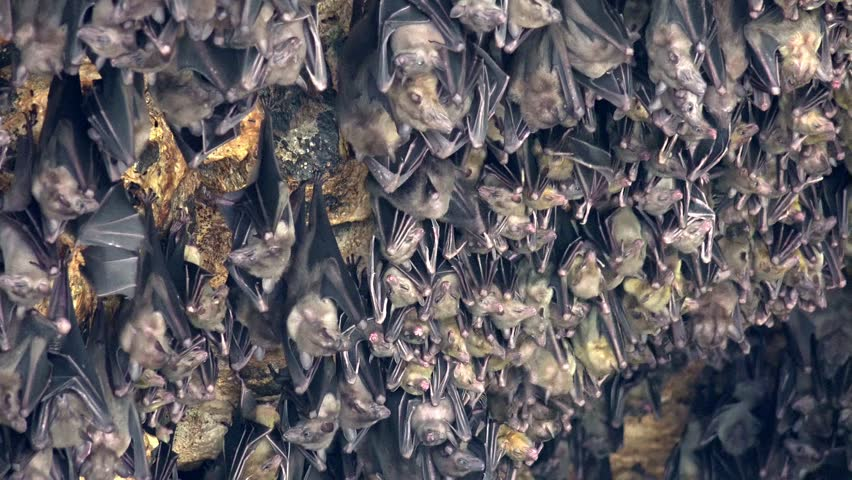 Bat Stock Video Footage 4k And Hd Video Clips Shutterstock