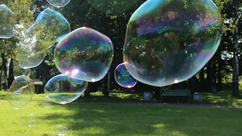 soap bubbles are flying off the trees in the forest in summer
