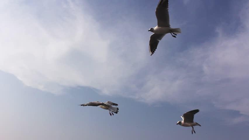 Birda  sky seagulls  #20376988