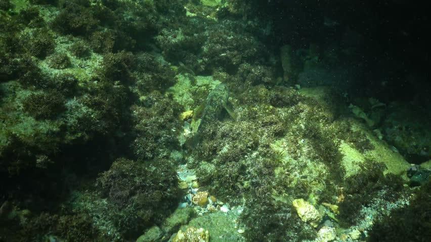 Header of Gobiidae