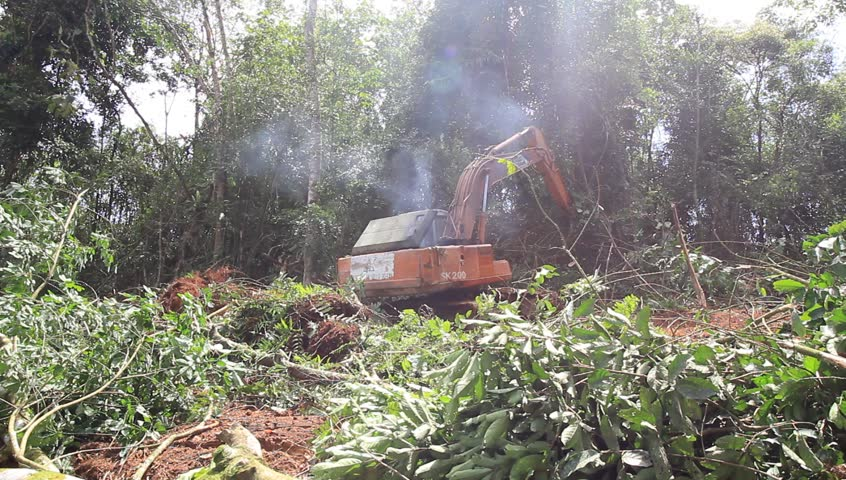 KUCHING, MALAYSIA - OCTOBER 13 2016: Deforestation. HD Video of tropical rainforest in Borneo being destroyed to make way for oil palm plantation