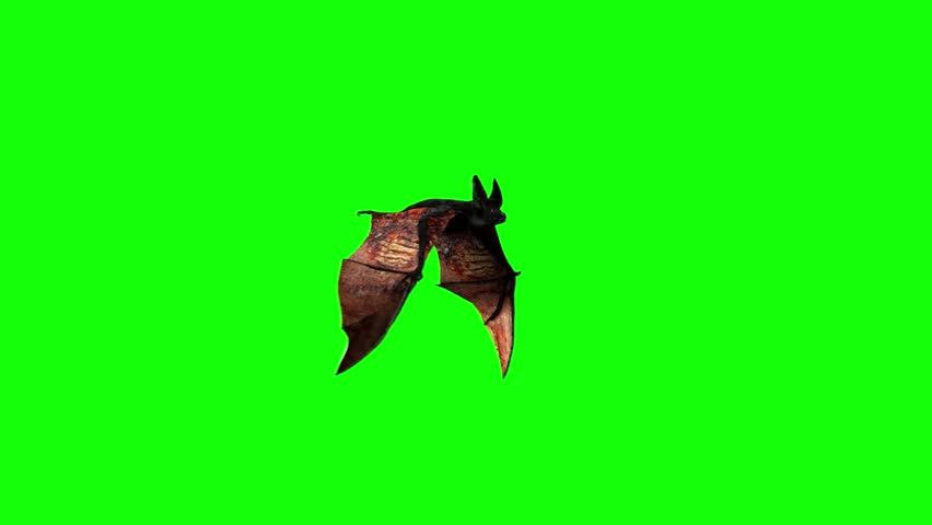 bat are flying on a green background of halloween render 3d - Halloween Background Video
