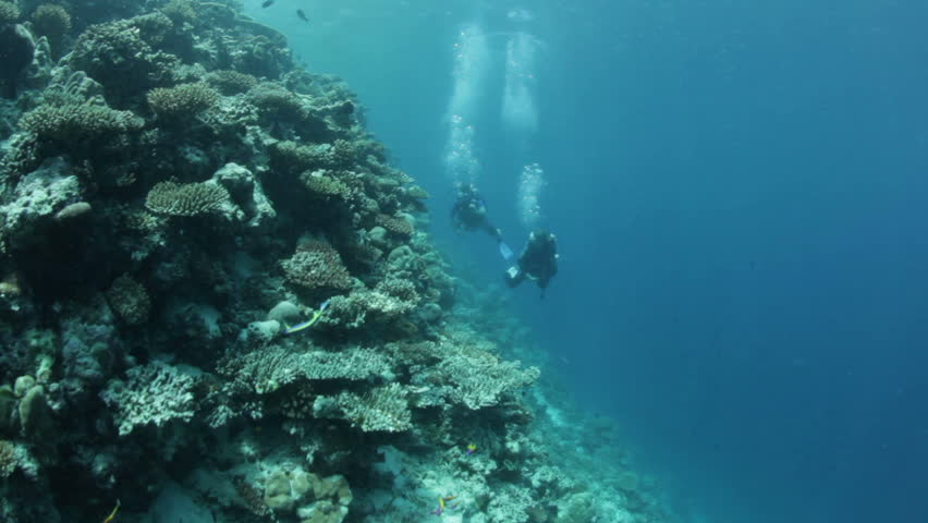 buddy team diving along coral reef against strong current