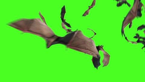 Flock of Bats Animals Halloween Scary Green Screen