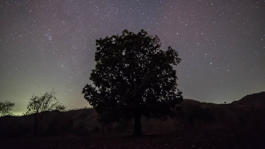 Time lapse of a lonely tree with stars rotating around it in circular manner