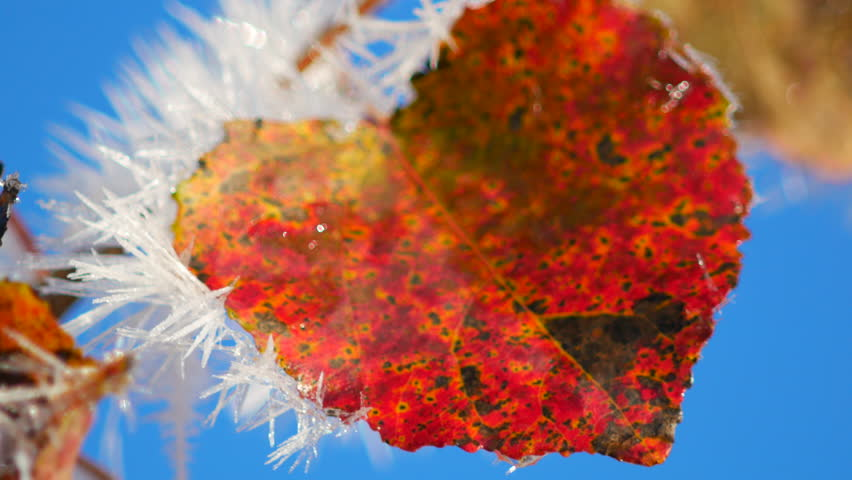 Australia on fire 4k animation the texture map of the earth was red leaves in the frost 4k stock footage clip gumiabroncs Image collections