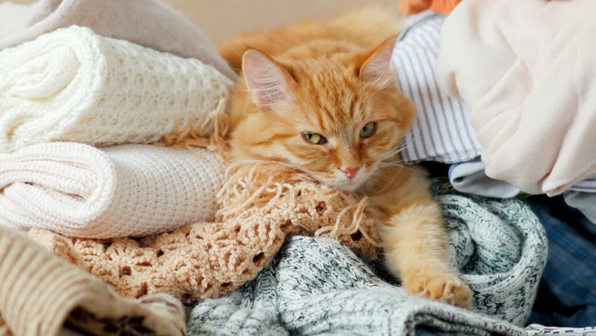 Cute ginger cat sleeps on a pile of knitted clothes. Warm knitted sweaters and scarfs are folded in heaps. Fluffy pet is dozing among cardigans. Cozy home background