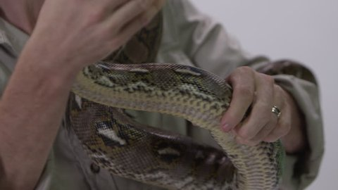[Python being held by zookeeper]Python being held by zookeeper