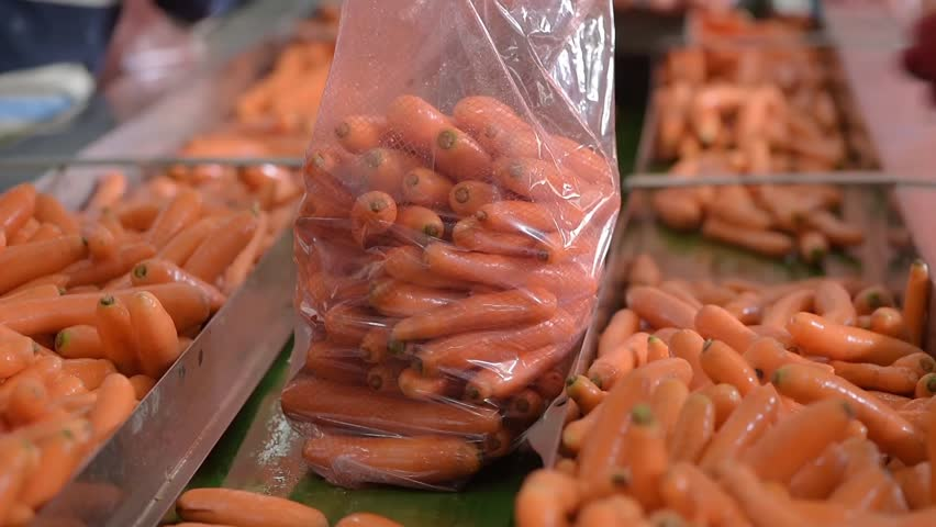 Footage as carrots packed in bags. Footage carrots on a conveyor belt in a factory | Shutterstock HD Video #21039058
