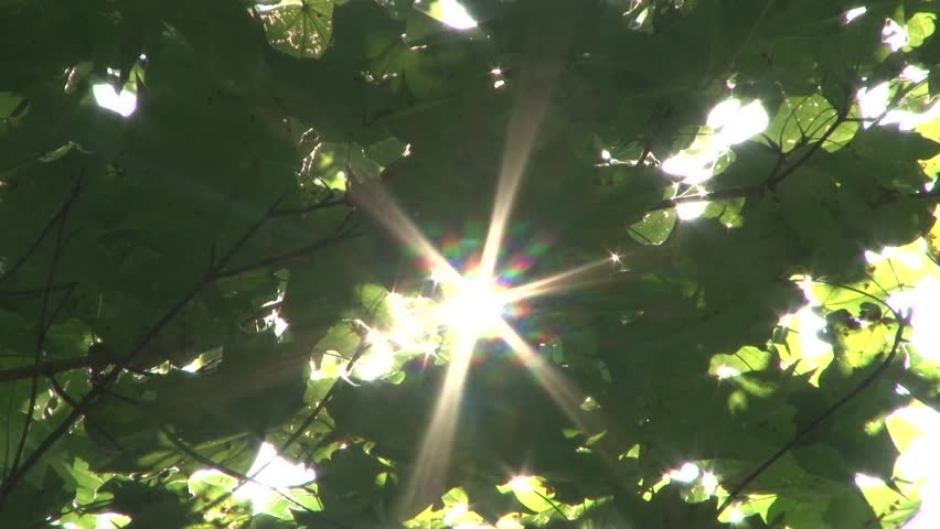 Beautiful sun rays pass through the leaves of the tree   Shutterstock HD Video #21147322